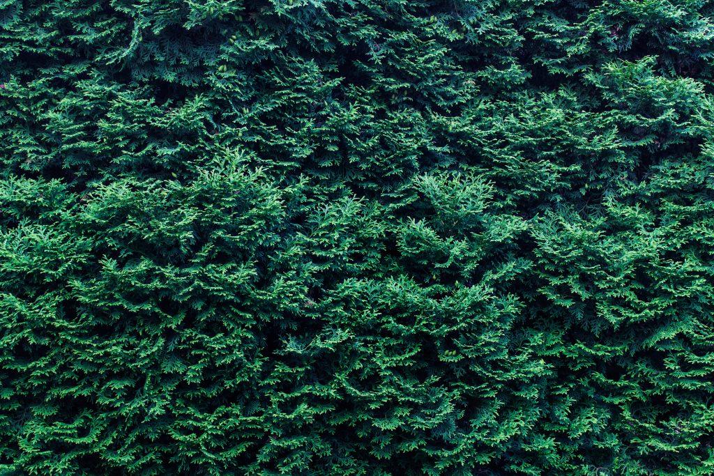 Výsadbou stromů pomůžete udržovat chladnější okolí