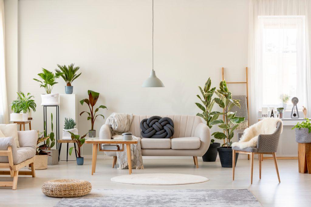 Vzduch vyčistíte i větším množstvím květin v bytě