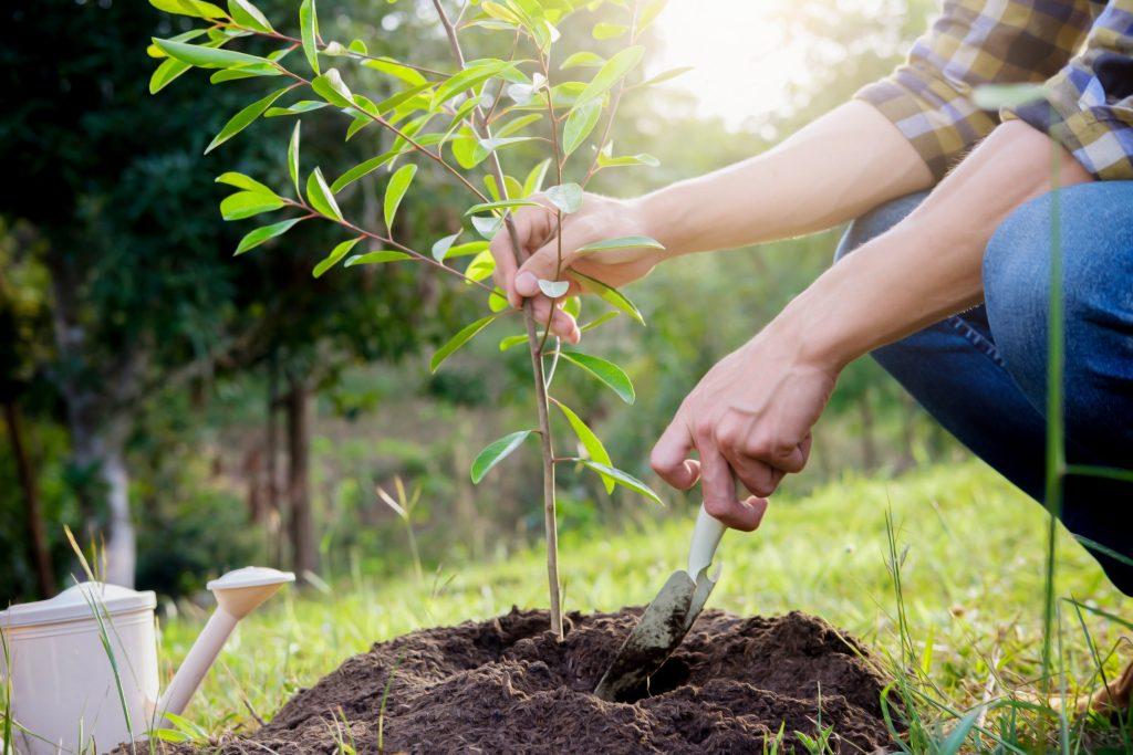 Sázení stromků dělá okolí zelenější