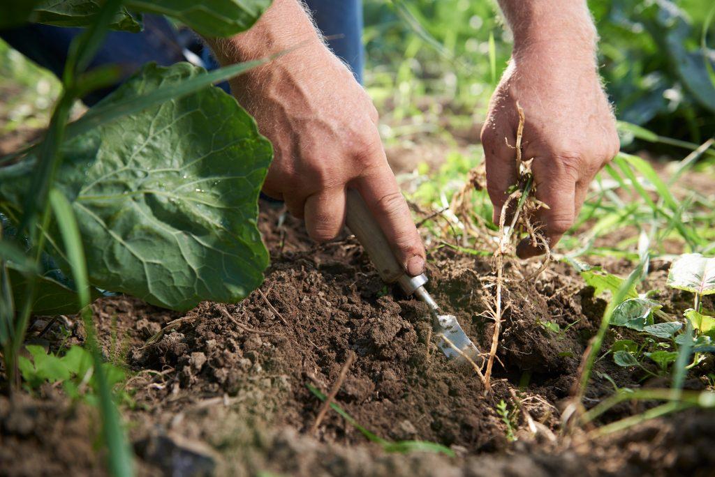 Pesticidům se alespoň částečně vyhnete s produkty z ekologického zemědělství