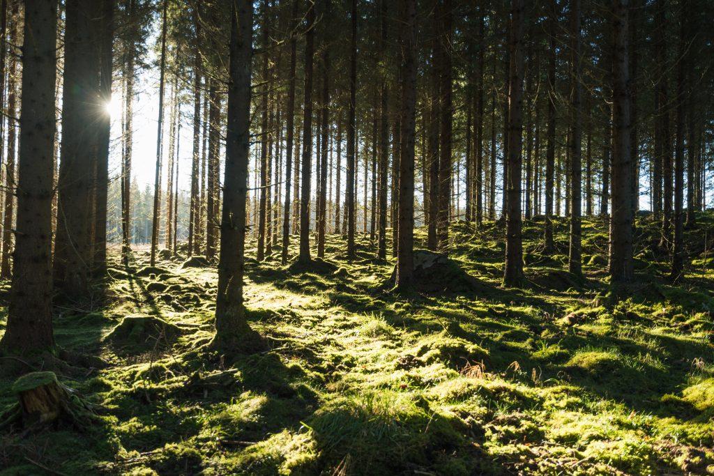 České lesy ohrožuje sucho