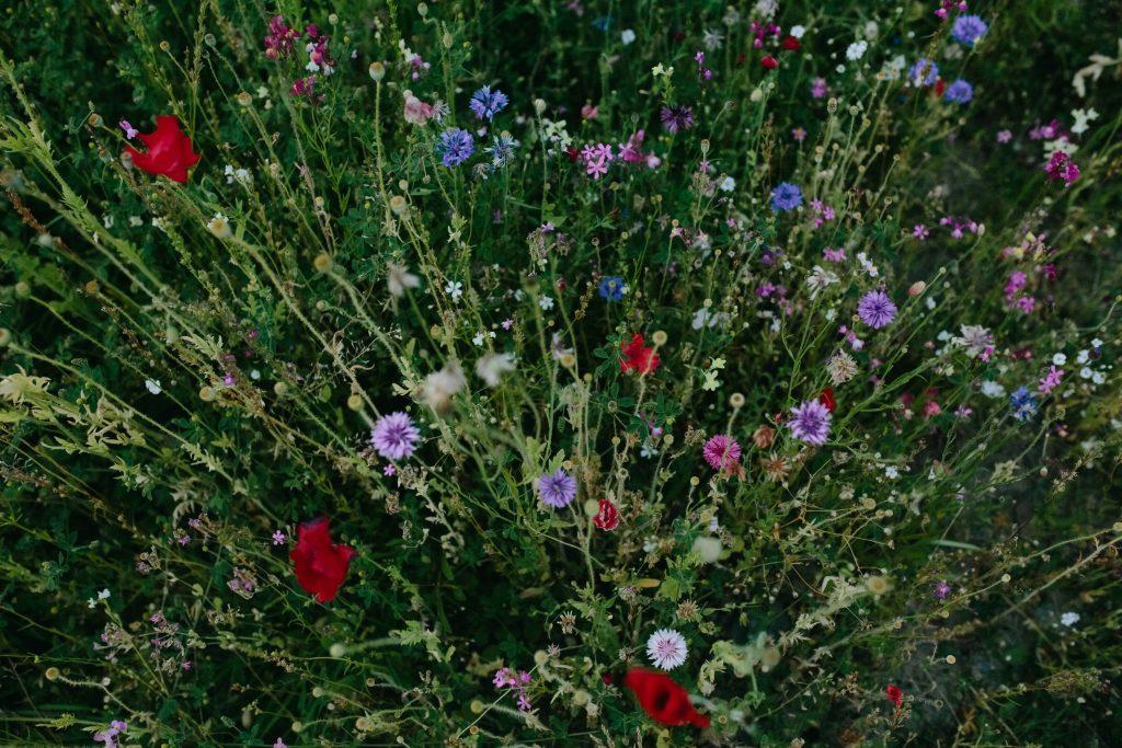 Rozmanité květiny na zahradě